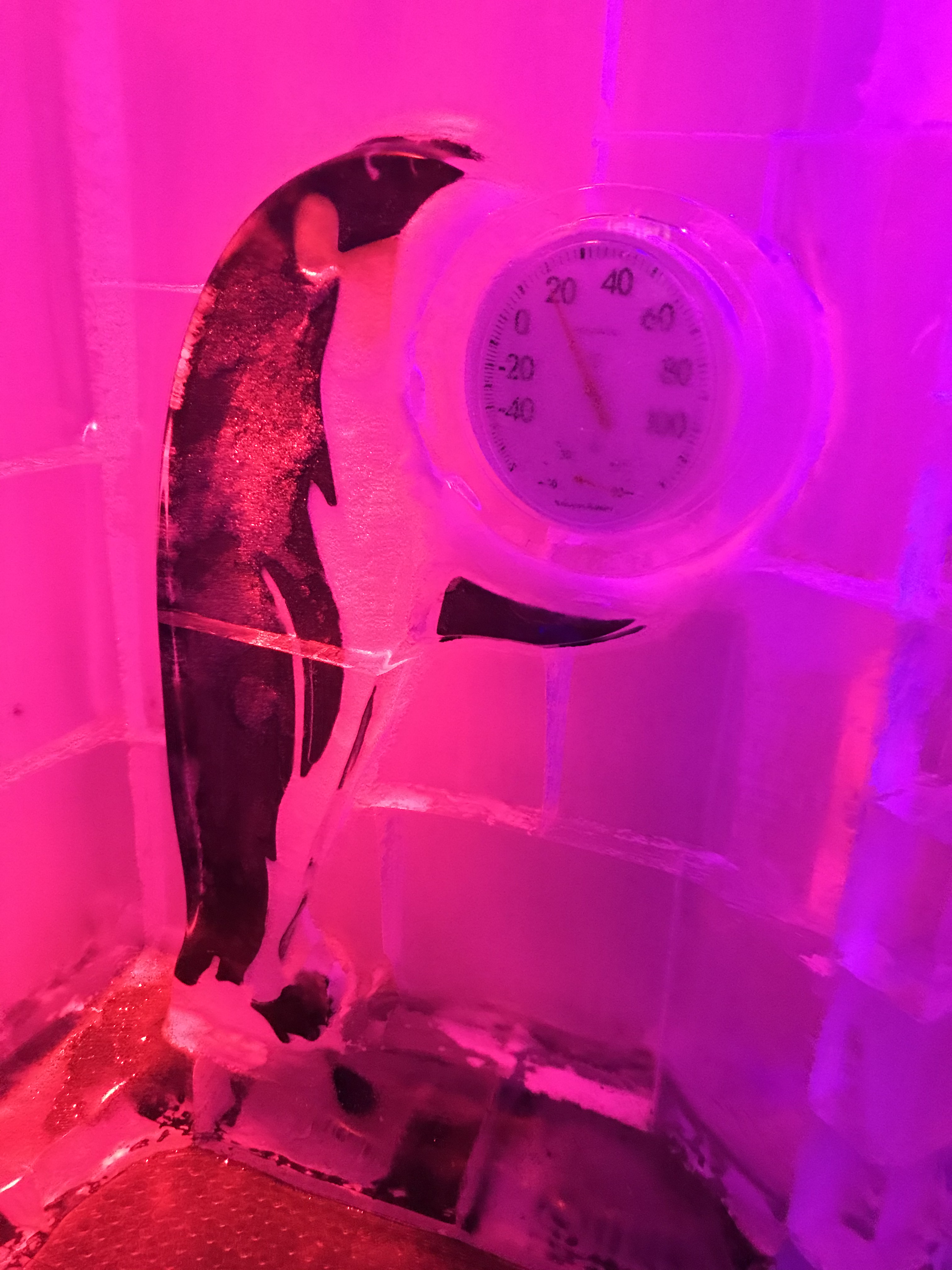 Penguin Holding the ICEBAR Orlando Thermostat